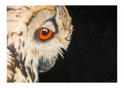 Eagle Owl Giclee Print by Alan Taylor Art