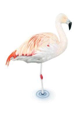 Flamingo giclee print by Alan Taylor Art