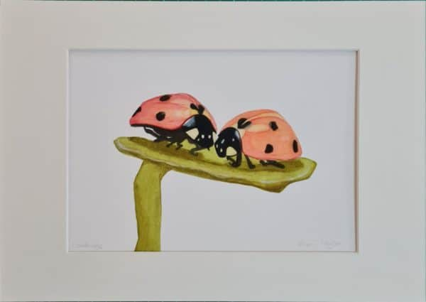 Ladybird themed