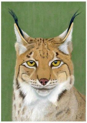 Lynx giclee print by Alan Taylor Art