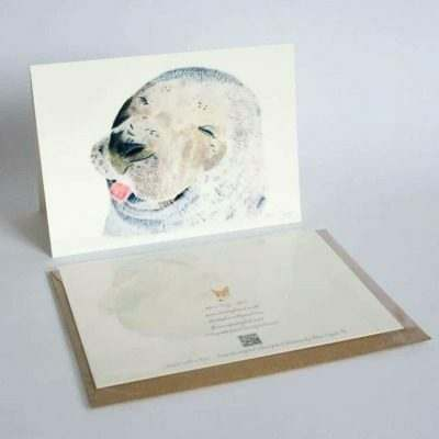 Seal greeting card by Alan Taylor Art