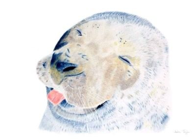 Seal giclee print by Alan Taylor Art