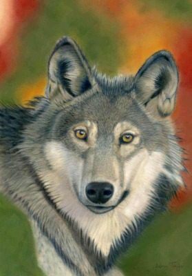 Wolf giclee print by Alan Taylor Art