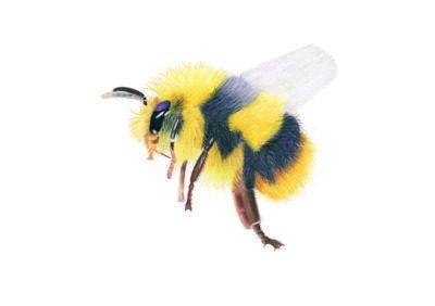 Bee giclee print by Alan Taylor Art