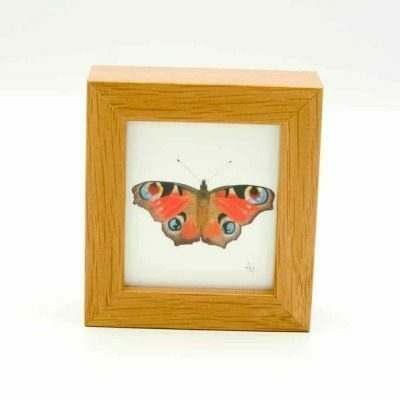 Butterfly miniature box framed art by Alan Taylor Art