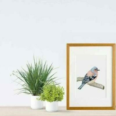 Chaffinch giclee print by Alan Taylor Art