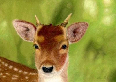 Deer giclee print by Alan Taylor Art