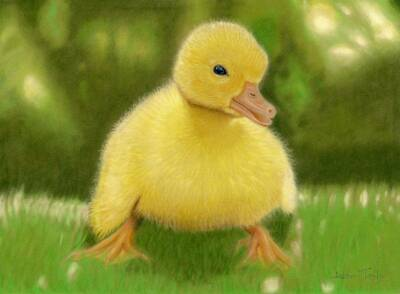 Duckling giclee print by Alan Taylor Art