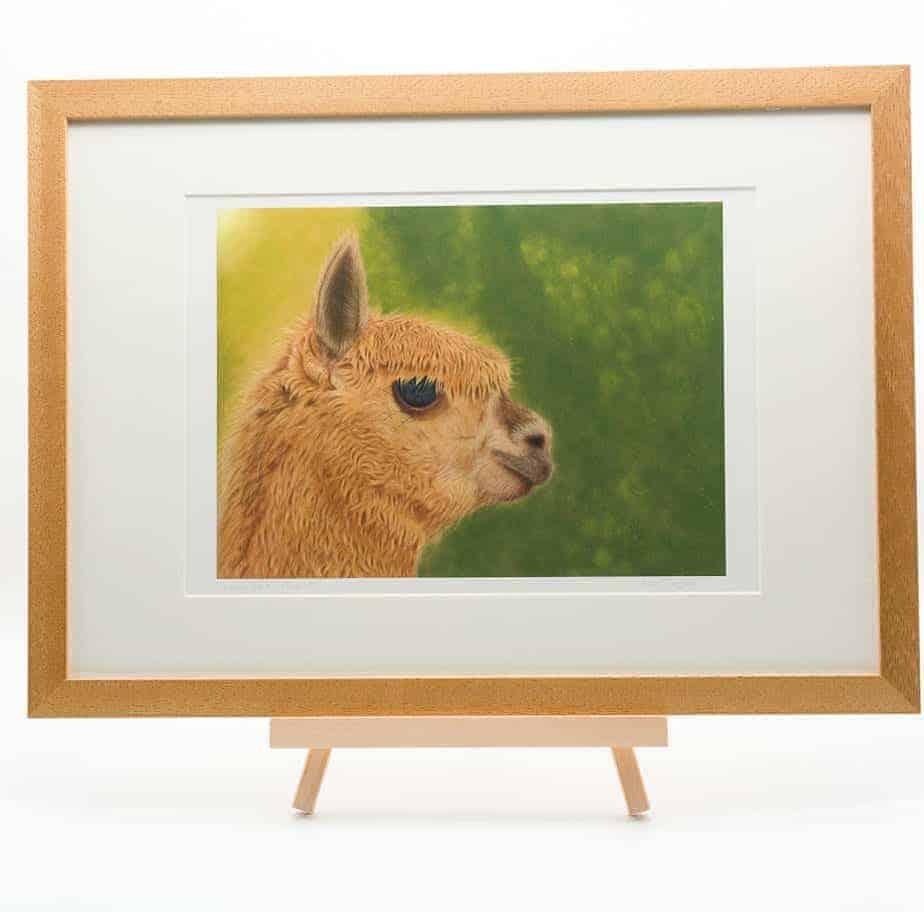 Alpaca giclee print by Alan Taylor Art