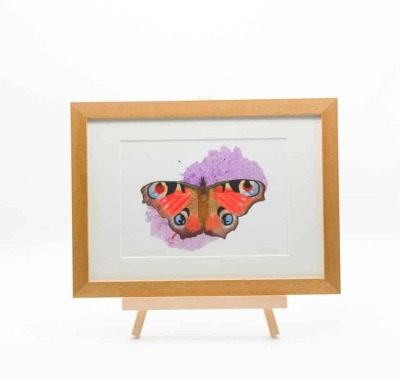 Butterfly giclee print by Alan Taylor Art
