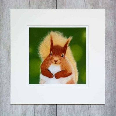 Squirrel giclee print by Alan Taylor Art
